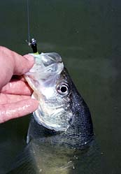 060500 oxbowcrappie3