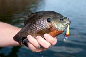 3ReasonsFishFastPanfish blog