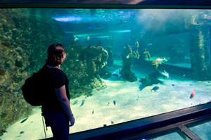 AquariumInsights blog