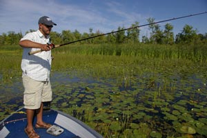 Bass angler fishing in a bed of weeds