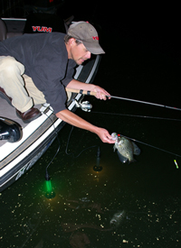 Crappie angler reaching over side of boat for his fish