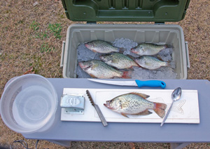 Table with Panfish and Fillet Panfish kit