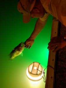 Night fishing angler releasing a fish into the water