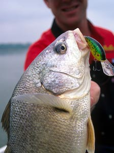 Angler holding a freshwater Drum