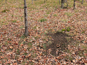 KnowYourDeerSigns Scrape