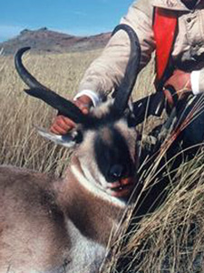 Hunter and Pronghorn