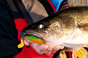 SmashFallWalleyeSwimbaits blog