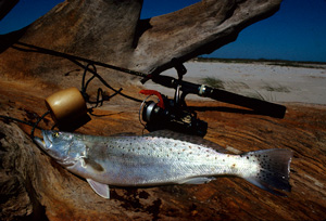 fishing rig & seatrout
