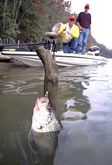 Crappie angler fishing a tree stump