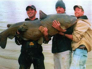 Three anglers holding 121.5-pound former world-record blue catfish