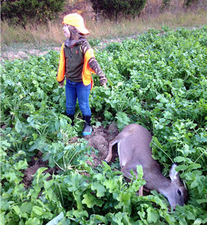 boy deer foodplot