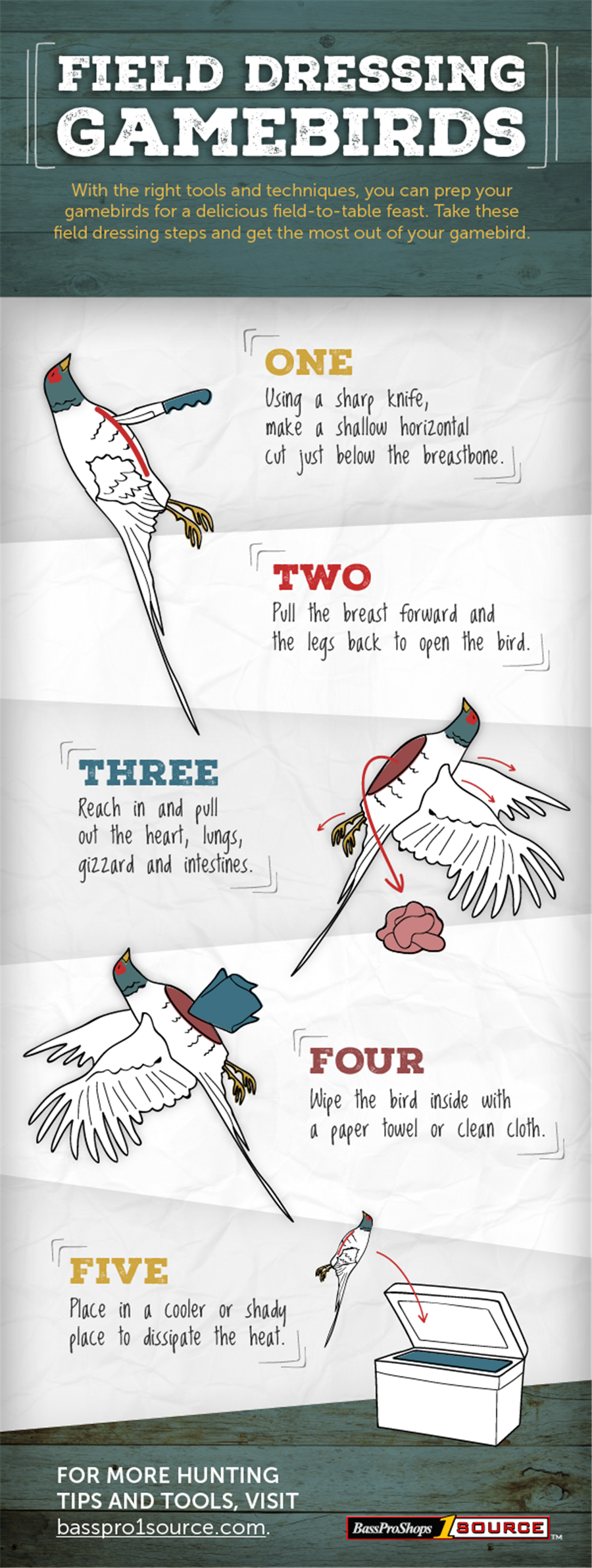 Artwork showing five steps to field dressing a gamebird