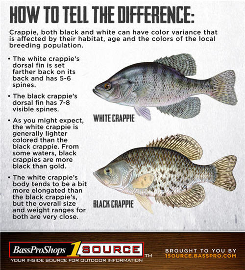 Reelfoot Lake in Tennessee is Panfish Paradise for Anglers | Bass