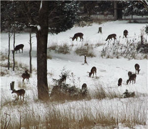 deer in snow1