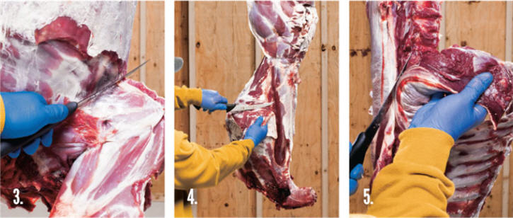 Butchering a deer- steps 3,4 & 5