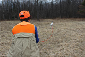Dog trainer in the field training a dog