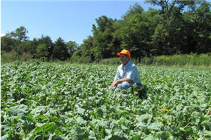 Farmer in food plot field