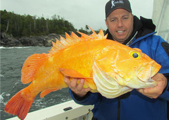 rockfish yellow eye