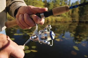 Spinning reel rigged to a fishing rod