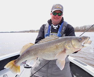 The author, Jason Mitchell with a gigantic walleye caught with a Kalin's Sizmic Shad Swim Bait. Slow trolling and dragging swimbaits can be incredibly effective for walleye.
