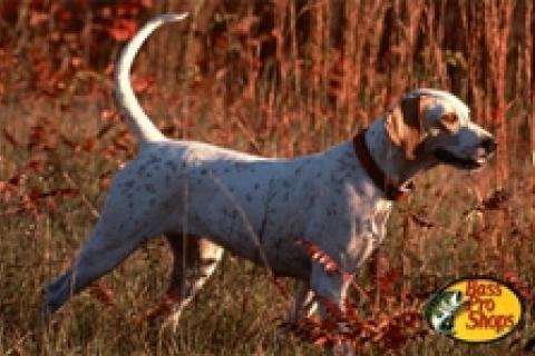 News & Tips: How to Keep Your Hunting Dog Fit Through the Summer...