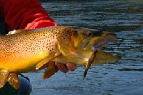 News & Tips: Cold Weather Tactics for White River Trout...