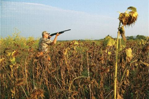 News & Tips: How to Dove Hunt Without the Crowds