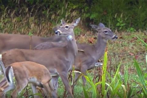 News & Tips: Tips for Deer Management, Shooting Accurately & Food Plots (video)...