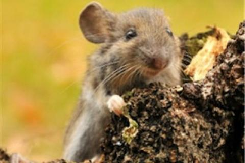 News & Tips: What You Need To Know About Hantavirus...