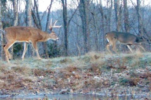 News & Tips: Deer Hunting Strategies: The Late Rut...