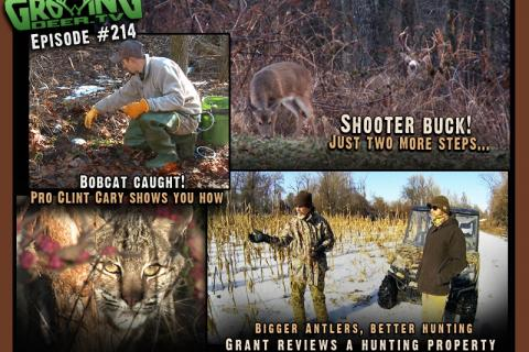 News & Tips: Bucks & Bobcats: Deer hunting & Trapping in The Late Season...