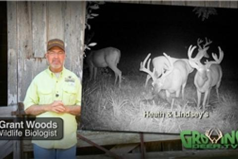News & Tips: Bucks in Velvet: Anticipating Deer Season in a Big Way...