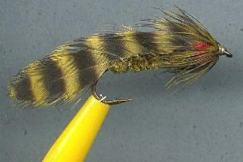 News & Tips: Fly Tying Tips: Dubbed Bodies
