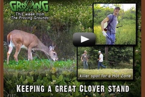 News & Tips: How to Grow the Best Clover Food Plots...