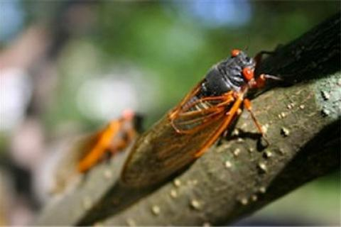 News & Tips: 3 Tips for Topwater Fishing During Cicada Season...