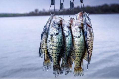 News & Tips: Fish Crappie Where They Are, Not Where You Want Them to Be...