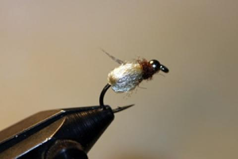 News & Tips: Consider the Deep Sparkle Pupa Fly This Spring...