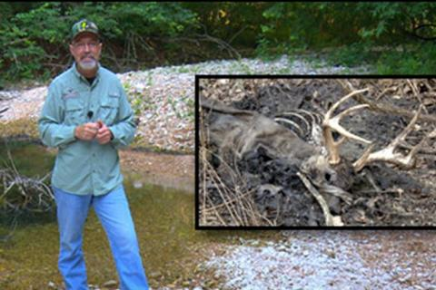 News & Tips: Explaining the Difference in Deer Diseases: EHD and CWD (video)...