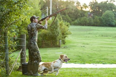 Man shooting shotgun and a dog preparing to retrieve bird