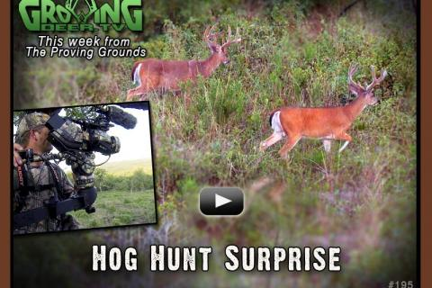News & Tips: Hogs, Antlers and Hidey Hole Food Plots...