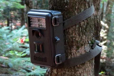 News & Tips: How Trail Cameras Prepare You for Deer Season...