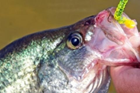 News & Tips: Crappie Fishing Tips: How to Catch Crappie...