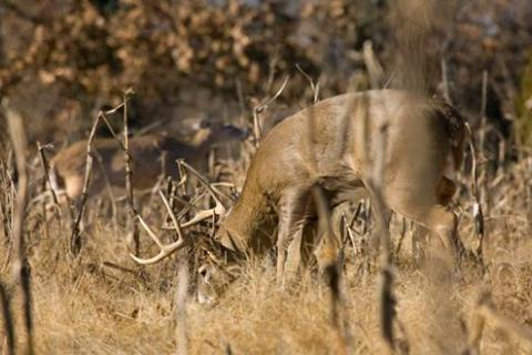 News & Tips: The Rut: In the Eyes of a Photographer...