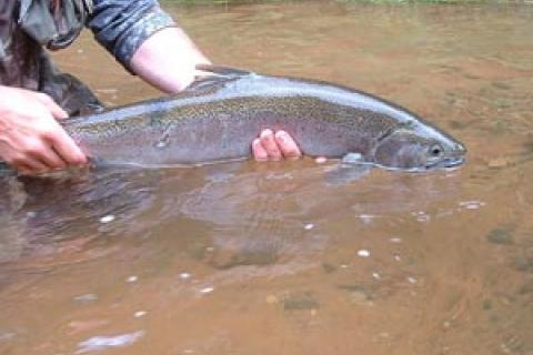 News & Tips: Scuds Make Sense for Spring and Early Summer Rainbows...