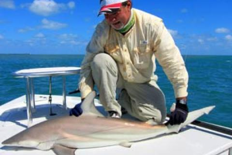 News & Tips: What You Need to Know About Flats Fishing for Sharks...