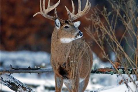 News & Tips: Hunting Deer Late in The Season