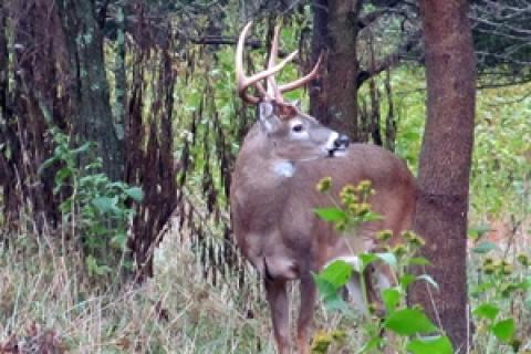 News & Tips: Late Season Hidey-Hole Bucks