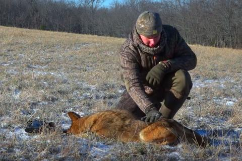 News & Tips: Our Best Predator Control Video Ever! We're Hunting and Trapping Coyotes (video)...