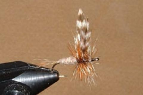 News & Tips: 13 Steps to Tying the Adams Dry Fly