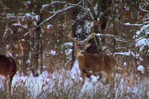 News & Tips: Deer Hunting: Changes for the Season  (video)...